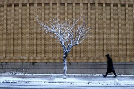 My Favourite Tree - Ana W.