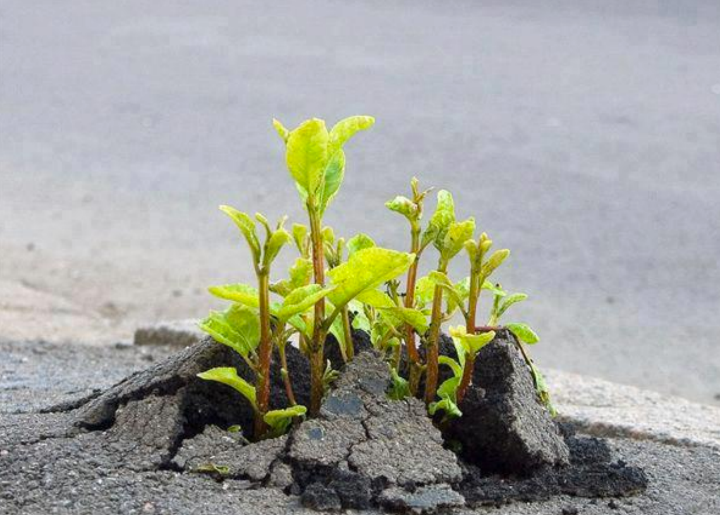 Sprouts through the concrete